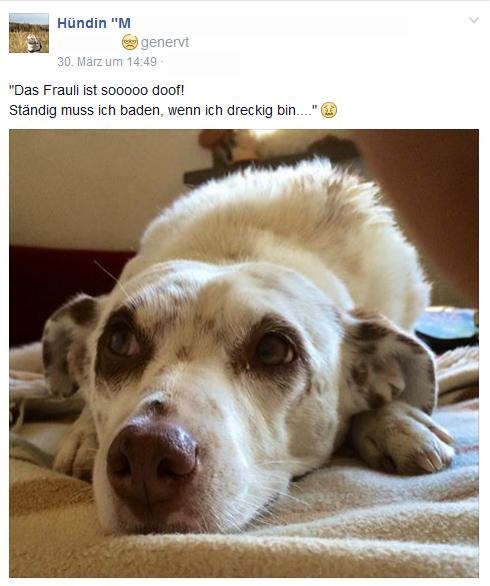 Das ist nicht Blondie... nur ein Hund